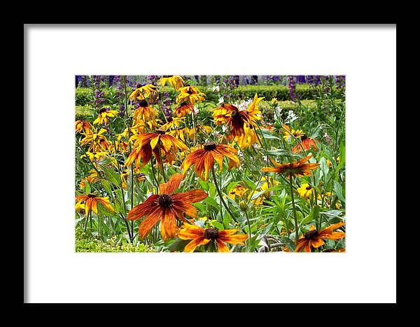 Sunflowers Framed Print featuring the photograph Sunflowers And Friends by Jean Booth