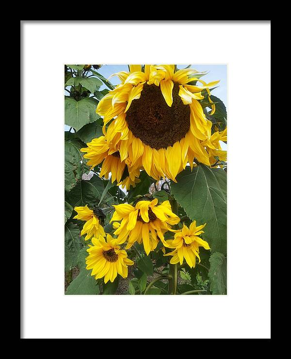Sunflower Framed Print featuring the photograph Sunflowers by Anjelika Furmanova