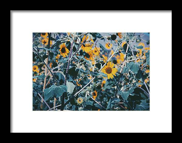 Framed Print featuring the photograph Sunflowers by Emily Miller