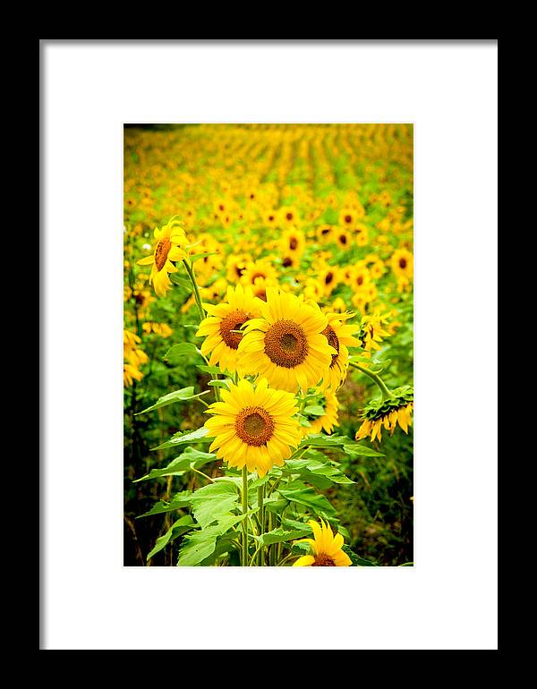 Lee Framed Print featuring the photograph Sunflowers by Greg Fortier