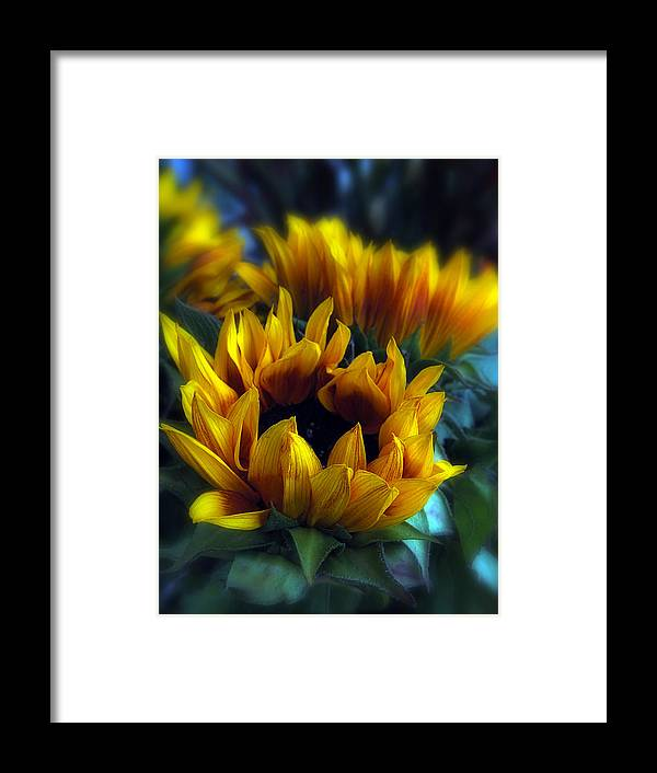 Flowers Framed Print featuring the photograph Sunflowers by Jessica Jenney