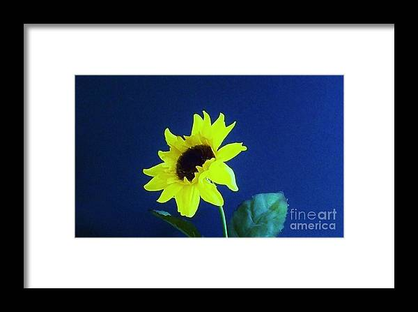 Photos Of Sunflower Framed Print featuring the photograph Sunflowers Look To The Sun by Marsha Heiken