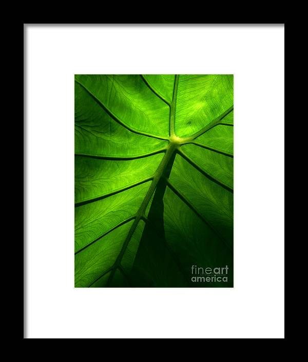 Green Framed Print featuring the photograph Sunglow Green Leaf by Patricia L Davidson