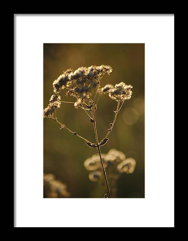 Foliage Framed Print featuring the photograph Sunkissed by Lori Mellen-Pagliaro