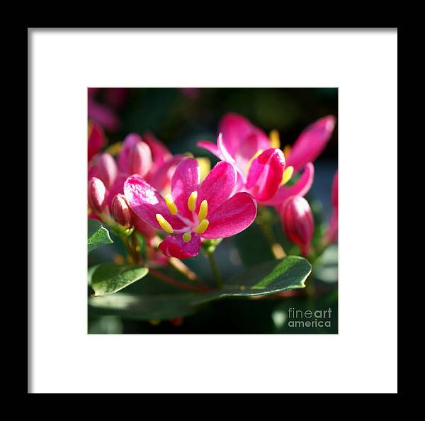 Pink Framed Print featuring the photograph Sunkissed by Valerie Fuqua