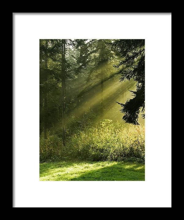 Nature Framed Print featuring the photograph Sunlight by Daniel Csoka