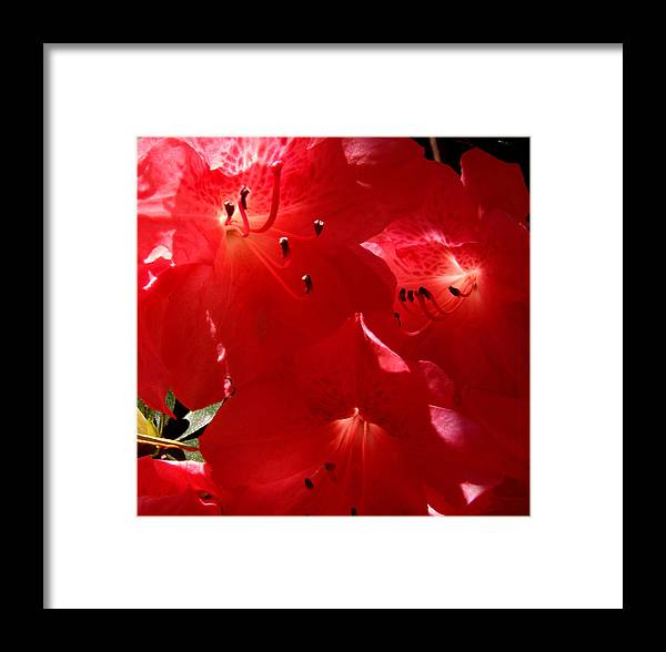 Glow Framed Print featuring the photograph Sunlight Glow by Nicole I Hamilton