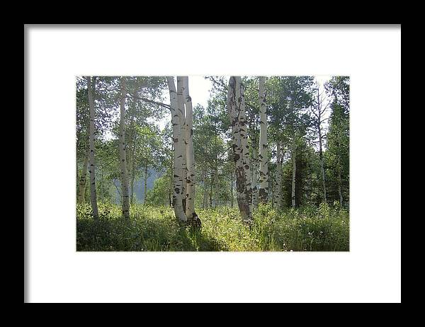 Trees Framed Print featuring the photograph Sunlight In The Trees by Susan Pedrini