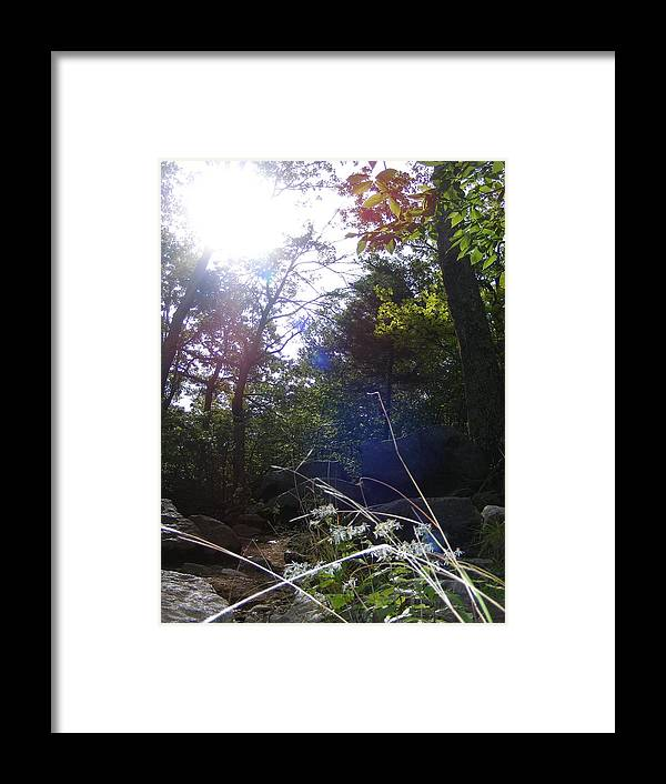 Tree Framed Print featuring the photograph Sunlight On Forest Ground by Alison Heckard