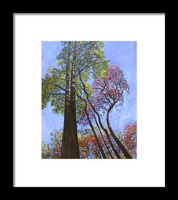 Fall Trees Highlighted By The Sun Framed Print featuring the painting Sunlight On Upper Branches by John Lautermilch