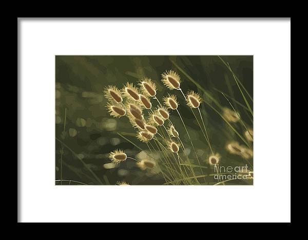 Grasses Framed Print featuring the mixed media Sunlight On Wild Grasses by Clive Littin