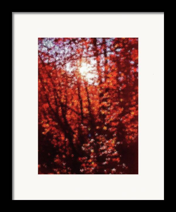 Fall Framed Print featuring the photograph Sunlight Thru Autumn Leaves Abstract by Steve Ohlsen