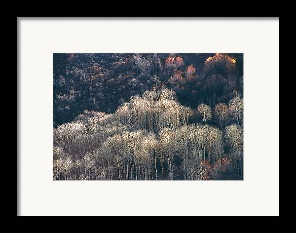 Aspens Framed Print featuring the photograph Sunlit Bare Autumn Aspens 1 by Steve Ohlsen