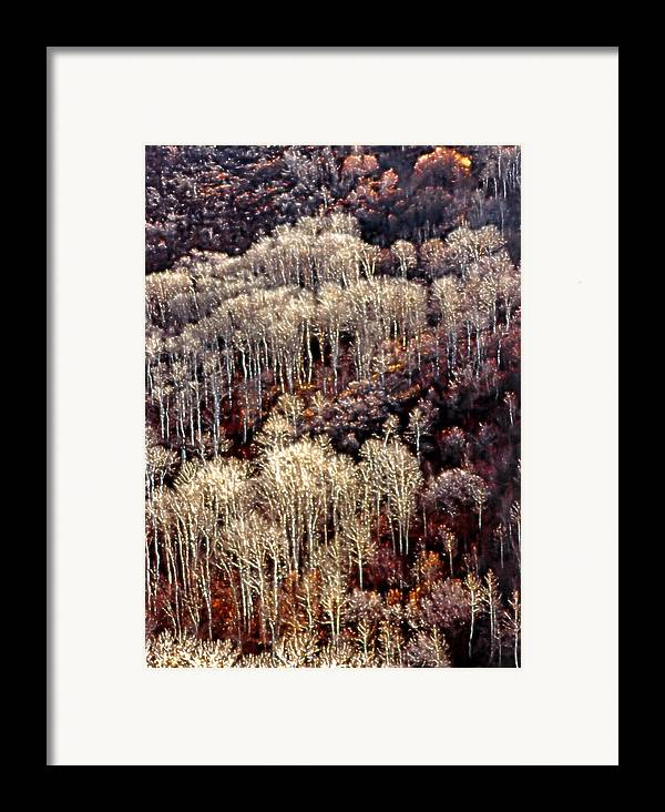 Aspens Framed Print featuring the photograph Sunlit Bare Autumn Aspens 2 by Steve Ohlsen