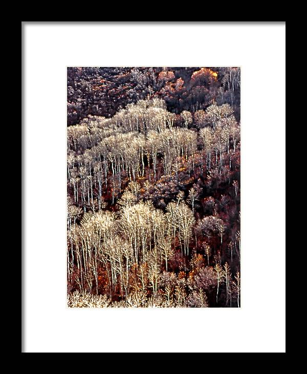 Aspens Framed Print featuring the photograph Sunlit Bare Autumn Aspens 2 by Steve Ohlsen