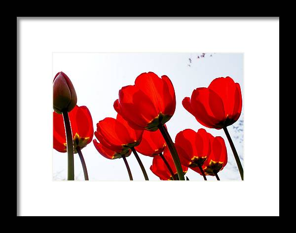 Flowers Framed Print featuring the photograph Sunlit Petals by Sonja Anderson