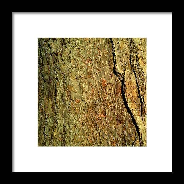 Sunlight Tree Bark Texture Framed Print featuring the photograph Sunlit Tree Bark by Anne Kotan