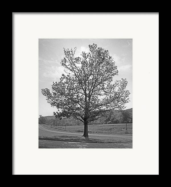 Trees Framed Print featuring the photograph Sunlit Tree by Paul Trunk
