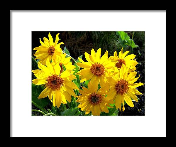 Wildflowers Framed Print featuring the photograph Sunlit Wild Sunflowers by Will Borden