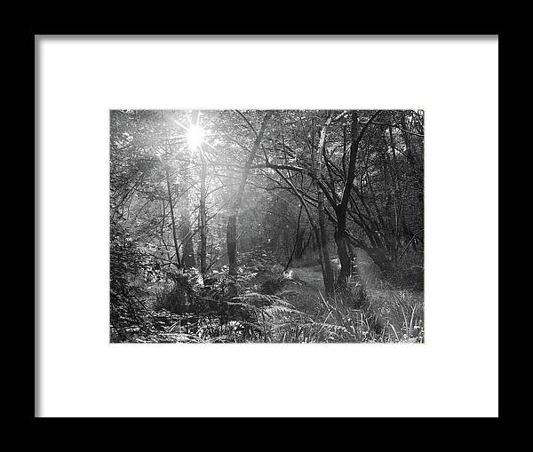 Framed Print featuring the photograph Sunlit Woods, West Dipton Burn by Iain Duncan