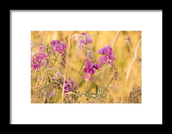Sunny Garden Framed Print featuring the photograph Sunny Garden 1 by Bonnie Bruno