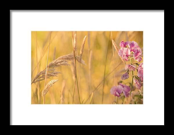 Garden Photo Framed Print featuring the photograph Sunny Garden 2 by Bonnie Bruno