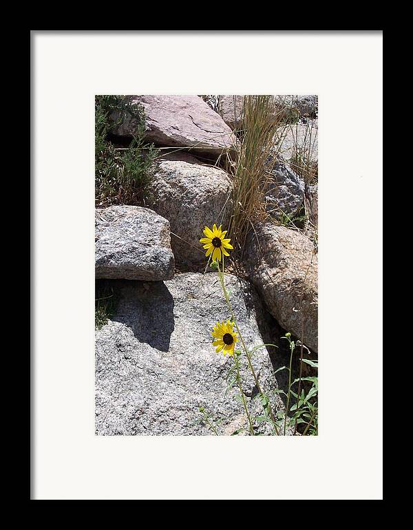 Scenic Veiw Framed Print featuring the photograph Sunny Side Of Life by Sarah Bauer