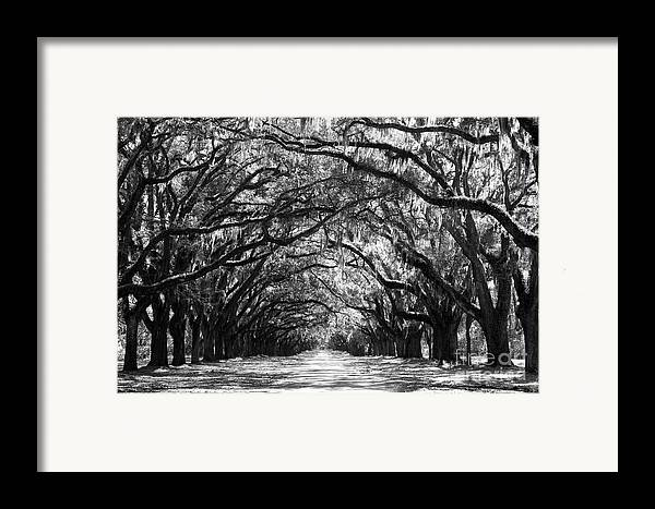 Live Oaks Framed Print featuring the photograph Sunny Southern Day - Black And White by Carol Groenen