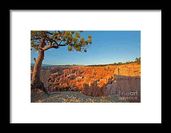 Bryce Canyon Sunrise Tree Utah Framed Print featuring the photograph Sunrise At Bryce by Eric Cassel