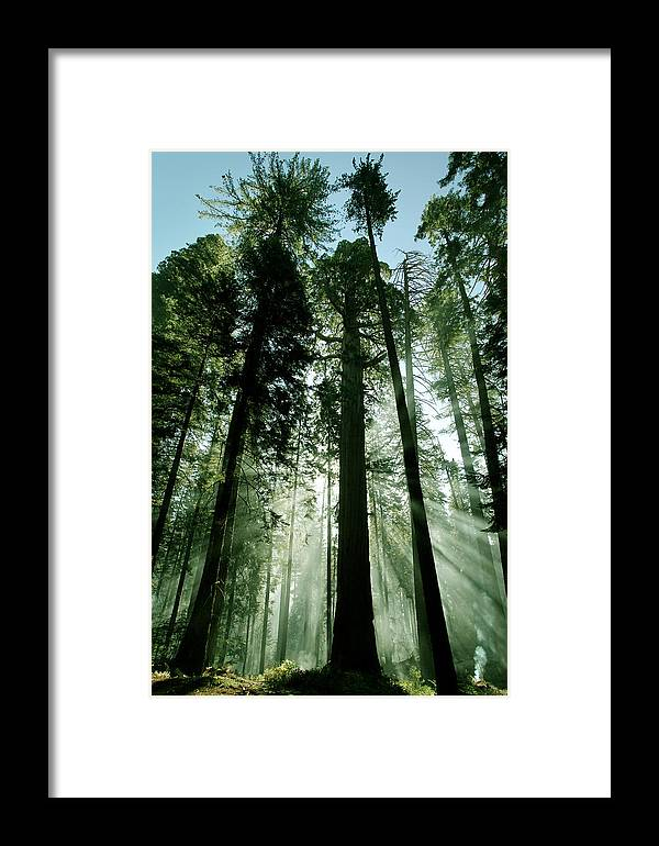 Sequoia National Park Framed Print featuring the photograph Sunrise Beams N Sequoia by Rick Pham