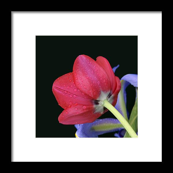 Flower Framed Print featuring the photograph Sunrise by Katherine Morgan