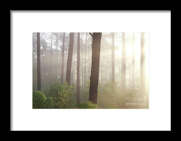 Nature Framed Print featuring the photograph Sunrise by Linda Langston