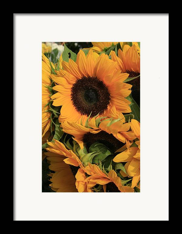 Flowers Framed Print featuring the photograph Suns And Brothers by Alan Rutherford