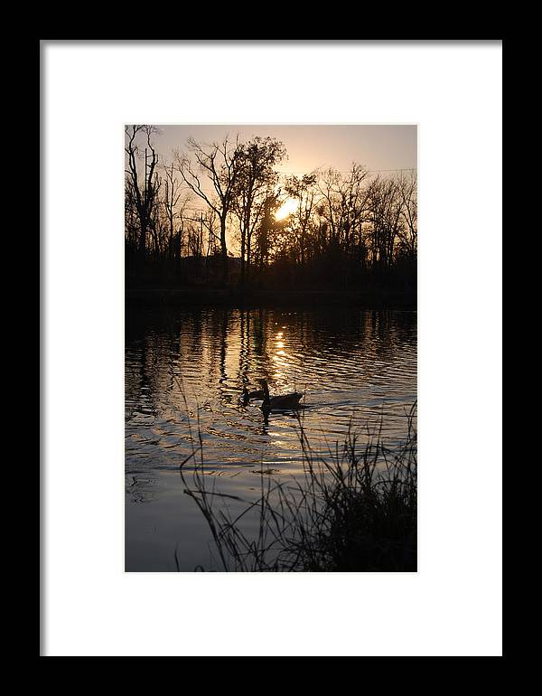 Trees Framed Print featuring the photograph Sunset by Audrey Venute