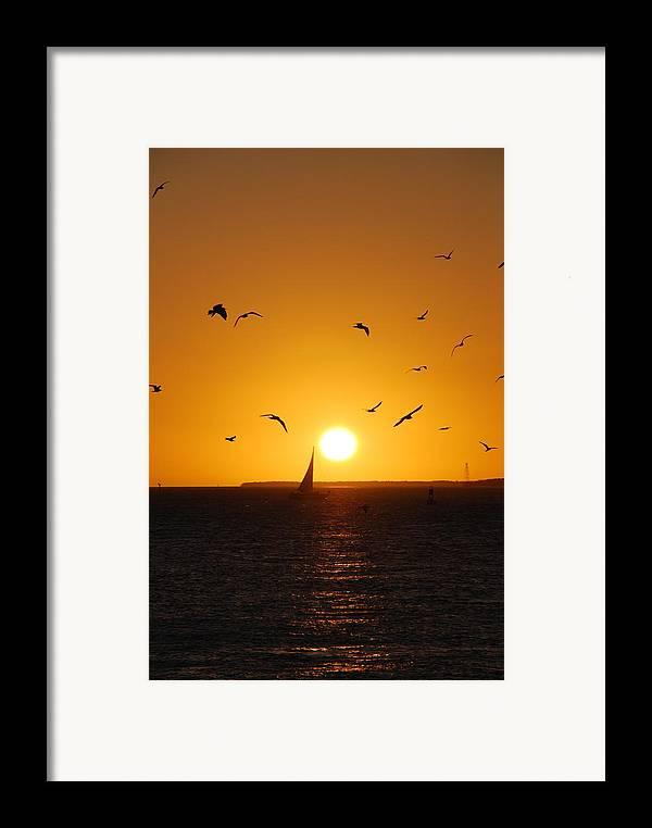 Sunset Framed Print featuring the photograph Sunset Birds Key West by Susanne Van Hulst