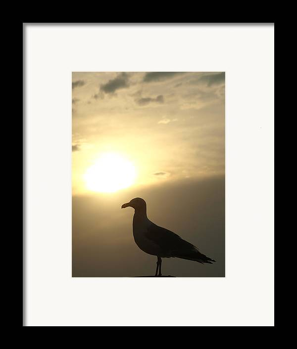Seagull Framed Print featuring the photograph Sunset Gull by Kim