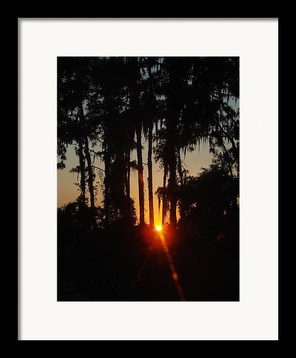 Sunset Framed Print featuring the photograph Sunset In The Woods by Kimberly Camacho