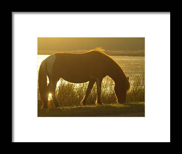 Assateague Framed Print featuring the painting Sunset Pony by Kim