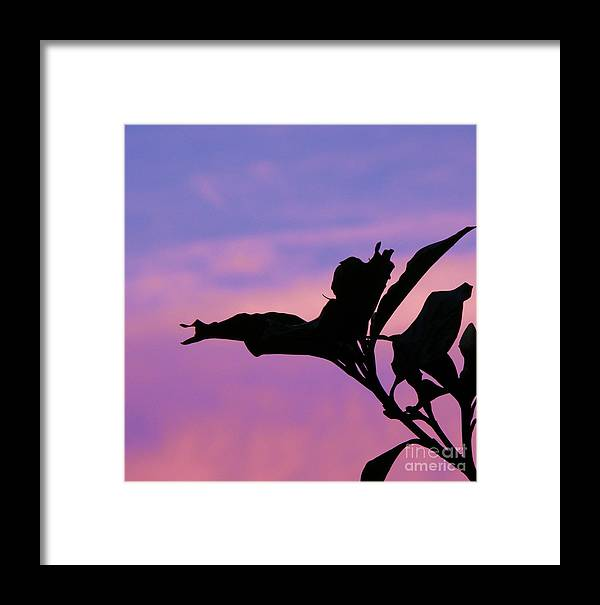 Sunset Framed Print featuring the photograph Sunset Silhouette by Rose Hill