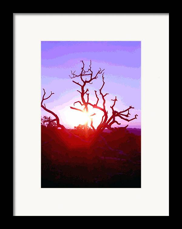 Desert Framed Print featuring the photograph Sunset Through Silhouetted Tree In Desert 2 by Steve Ohlsen