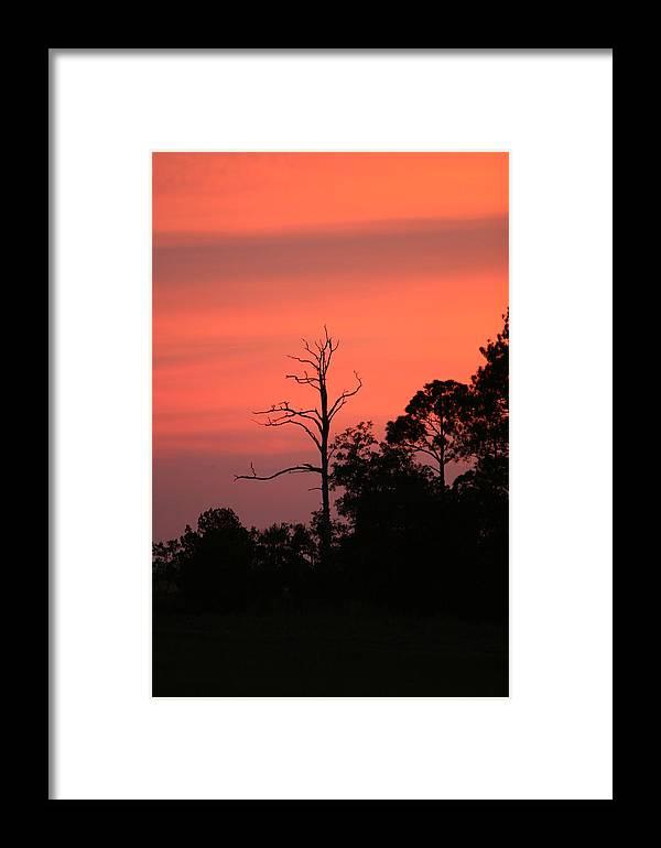 Sunset Framed Print featuring the photograph Sunset by Walt Reece