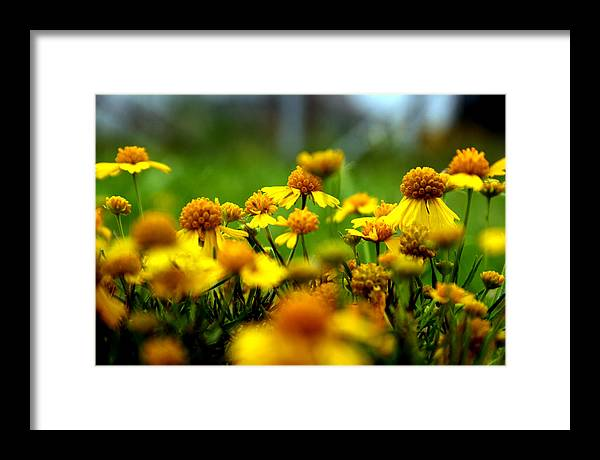 Flowers Framed Print featuring the photograph Sunshine by Alexandra Harrell