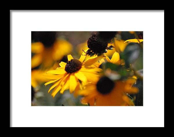 Flowers Framed Print featuring the photograph Sunshine And Daisies by Trudi Southerland