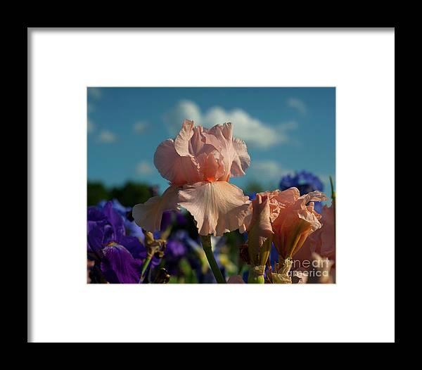 Landscape Framed Print featuring the photograph Sunshine Dance by Jalene Januze
