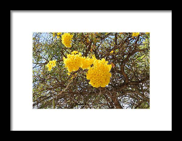 Flowers Framed Print featuring the photograph Tree Burst by Deborah Napelitano