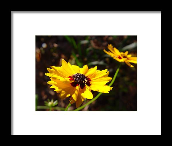 Nature Framed Print featuring the photograph Sunshine Greeting by Eldon Roberts