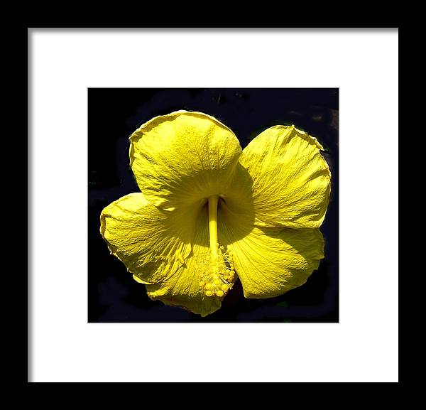 Flower Framed Print featuring the photograph Sunshine by Jeanette Oberholtzer