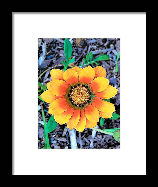 Flowers Framed Print featuring the photograph Sunshine Of My Life by Vijay Sharon Govender
