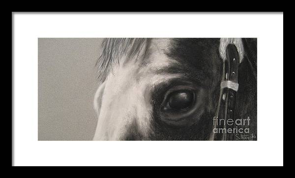 Horses Framed Print featuring the drawing Sunshine Queenie I by Sabina Haas