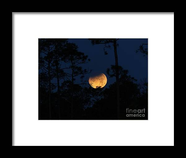 Super Blue Blood Moon Partial Eclipse Framed Print featuring the photograph Super Blue Blood Moon Partial Eclipse by Teresa A and Preston S Cole Photography